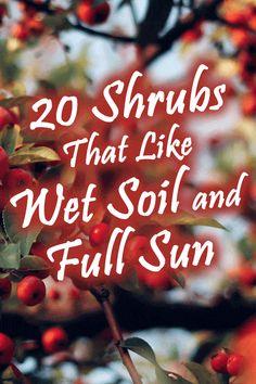 Pool Landscaping Plants, Backyard Drainage, Backyard Garden Landscape, Rain Garden, Water Garden, Sloping Backyard, Full Sun Shrubs, Full Sun Perennials, Dogwood Shrub