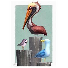 The Beach bird trifecta #pelican #seagull #plover #beach #ocean #birds #art…