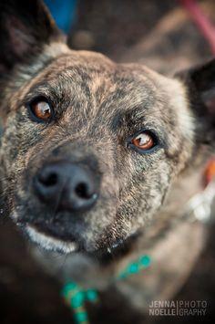 Denver pet photography, australian cattle dog, Colorado Pet photography, Jenna Noelle Photography