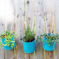 Make these easy hanging garden tins for your herbs and flowers this summer!