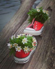 Beautiful Flowers Images, Flower Images, Love Flowers, My Flower, Flower Power, Bellis Perennis, Wonder Art, Miniature Photography, Daisy Love