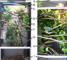 Chameleon Enclosure, adding plants and branches by Chameleon Forums