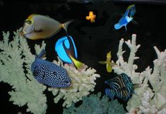 beautiful saltwater fish