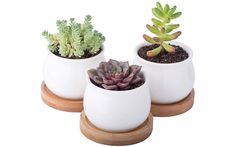 Succulents and Planters | Our definitive gift guide for the Instagram lover in your life.