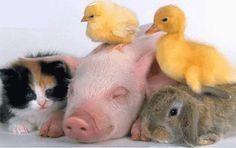 fotos de animales - Buscar con Google