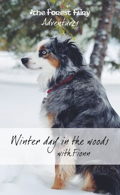 Winter day in the woods with Fionn. Follow our adventures on The Forest Fairy Blog.