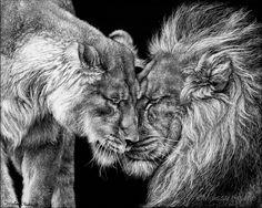 Melissa Helene | Blog: African Lion | Endangered Species Series