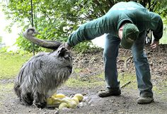 May 8, 2014: A rhea cares for her eggs at Hagenbeck Zoo in Hamburg, Germany, on May 6.