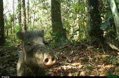Field Museum shares animal selfies captured in the Amazon - UPI.com