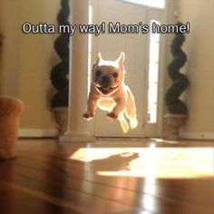 out of the way mom is home cute little dog is excite Funny Pictures And Quotes Of The Week - 50 Pics