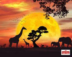 """Résultat de recherche d'images pour """"safari"""""""