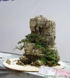 2009 Landscape Bonsai Exhibition in Chongqing-1