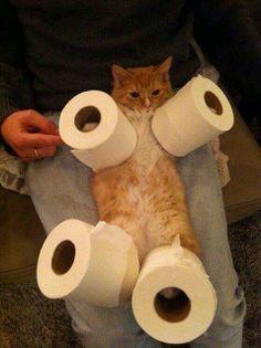 Toilet paper cat .