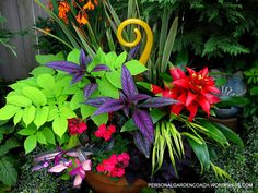 Check out the color combination in this container garden. Stunning!