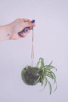 DIY suspension végétale – kokedama