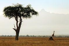Tunnelmia Selousin safarilta! #Temamatkat #Safari #Tansania  http://www.temamatkat.fi/Matkavalikoima/Afrikka/Tansania/Selousin-safari-Tansaniassa/