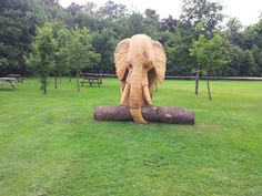 Oak Wood #sculpture by #sculptor Robert Coia titled: 'African Elephant (life size Carved Wood sculptures)'. #RobertCoia