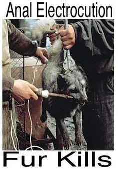 Fur+Kills.jpg 280×400 pixels