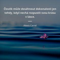 Člověk může dosáhnout dokonalosti jen tehdy, když nechá rozpustit svou krásu v lásce. - Alexis Carrel #láska #krása #dokonalost Quotes, Quotations, Quote, Shut Up Quotes