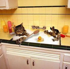 Writing Prompt - El gato se baña en el fregadero.   ¿Y qué más hace cuando no están sus dueños? ¿Cómo es la rutina diaria de este gato?