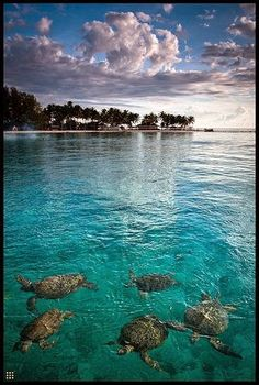 Derawan Island, East Kalimantan, Indonesia   Incredible Pics