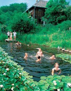 Love to swim but hate the chlorine? Why not convert your pool into a natural pool that offers a chemical-free way to stay cool. Natural Swimming Pools recreate pristeen ponds and mountain pools found in nature. The water is kept sparkling clean by circulating it through an ecosystem of water plants.