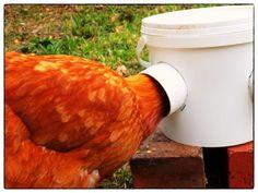 DIY voederbak voor kippen