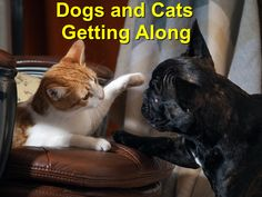 Over the years the rivalry witnessed between cats and dogs has become an acceptable practice. Because of this, many pet owners prefer adopting either of the two as opposed to both of them at a go. Wood Animal, Dog Training, Over The Years, Your Dog, French Bulldog, You Got This, Two By Two, Dog Cat, Adoption