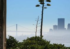 San Francisco misty view - city getaways - click for tips!