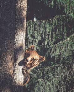 Suas fotos de animais da floresta são tão próximas e íntimas que eles até parecem melhores amigos