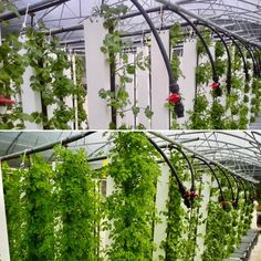 Why do some vertical farms fail? Here are 9 reasons why vertical farms fail from the history of three major vertical farms -- and how to avoid the mistakes.