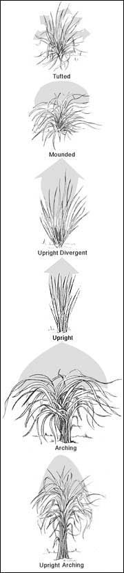 Excellent article: Ornamental grasses classified by architectural forms.
