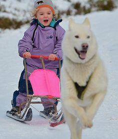 Three-year-old Ella Sugars enjoys a ride on a sled pulled by a gorgeous husky during a practice for the Aviemore Sled Dog Rally in Scotland.