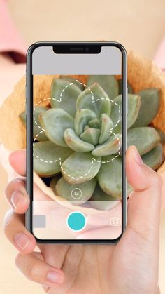 Your guide to all flora is right here! Plantyx will identify any plant, flower or tree from a single photo. Try the most accurate plant identification app! Outdoor Plants, Outdoor Gardens, Homestead Gardens, Cacti And Succulents, Succulent Terrarium, Planting Succulents, Plant Identification, Plants Are Friends, Deco Floral