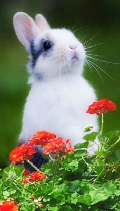 """Bunny Rabbit: """"I smell carrots cooking over there!"""" <3"""