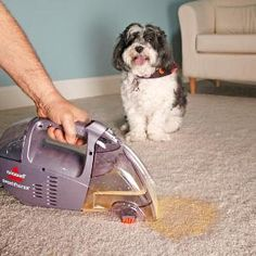 Eliminate pet stains and odors quickly after the accident by using this simple vacuum technique plus special bio-enzyme cleaners. Home remedies that use vinegar and baking soda simply mask the odor for a short time and don't eliminate the cause. Instead, buy a product made for your particular type of pet mess.