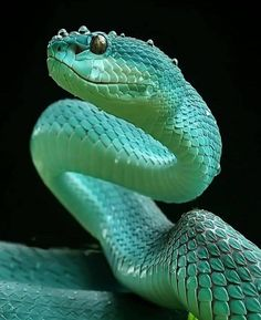 Extraordinary but deadly 🌈💀 📸 Pretty Snakes, Beautiful Snakes, Les Reptiles, Reptiles And Amphibians, Giant Anaconda, Snake Wallpaper, Kinds Of Snakes, Deadly Animals, Pet Snake