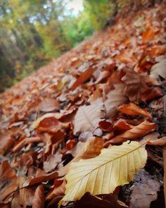 fallen leaves on the ground 🍁🍂 Fallen Leaves, Autumn Leaves, Stuffed Mushrooms, Polka Dots, Mood, Lights, Vegetables, Stuff Mushrooms, Fall Leaves