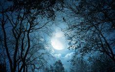 luar, noite, rvores, natureza, paisagem, nuvens, lua