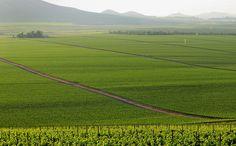 Goose Ridge Estate Vineyards Columbia Valley
