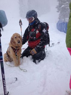 Avalanche dog, Rio - he looks patient