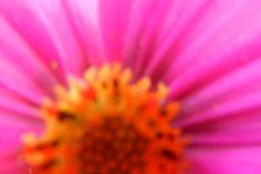 Garden flowers - Extreme closeup - 460