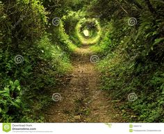 Enchanted Tunnel Path In The Forest Royalty Free Stock Image - Image: 23859716