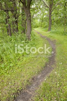 path through woods - summer Royalty Free Stock Photo