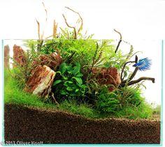 2013 AGA Aquascaping Contest - Entry #221