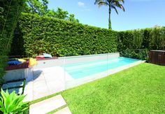 Screening plants: creating your outdoor sanctuary - Completehome Screen Plants, Small Backyard Pools, Pool Landscaping, Hedges, Google Images, Swimming Pools, New Homes, Ocean, Outdoor Decor