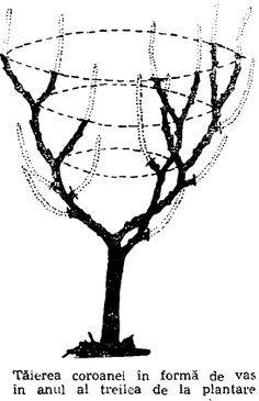 Grafting Plants, Espalier Fruit Trees, Garden Furniture Design, Bonsai Art, Vegetable Garden Design, Plantar, Grape Vines, Mother Nature, Shrubs
