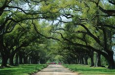 I love roads lined with trees.