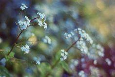 Technicolour Dreamin | Flickr