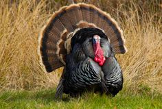9 Turkey Hunting Tips from the Pros [ EgozTactical.com ] #hunt #tactical #survival